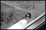 Птичка в окно ударилась